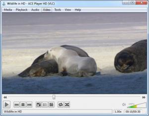 Enlarge Ace Stream Media Screenshot