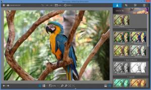 Enlarge InPixio Free Photo Editor Screenshot
