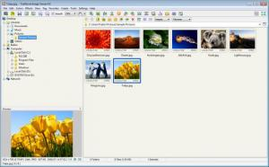 Enlarge FastStone Image  Viewer Screenshot