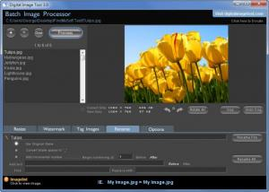Enlarge Digital Image Tool Screenshot