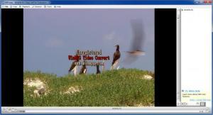 Enlarge SWF.max Flash Player Screenshot