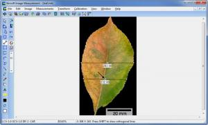 Enlarge Bersoft Image Measurement Screenshot